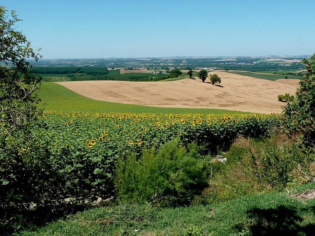Castelnau-d-Arbieu-C_tournesols.jpg