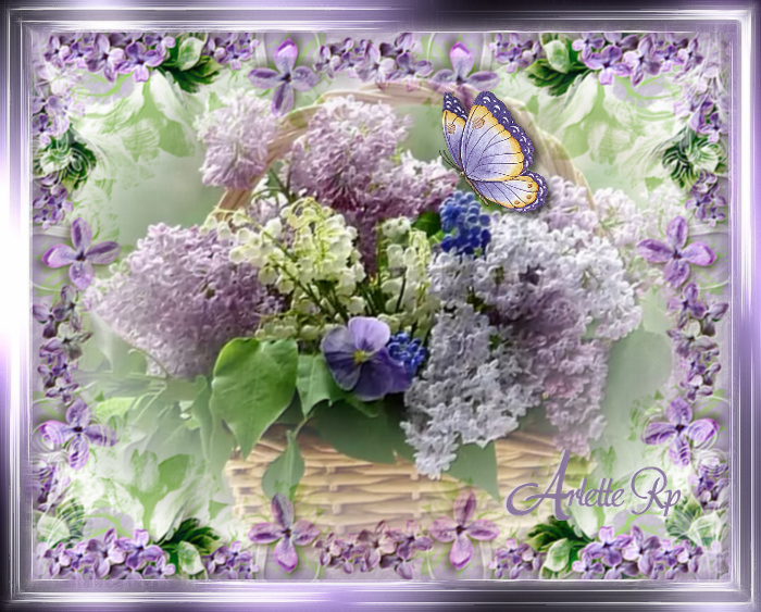 Fleurs diverses 5