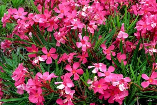 av03---Belles-fleurs.JPG