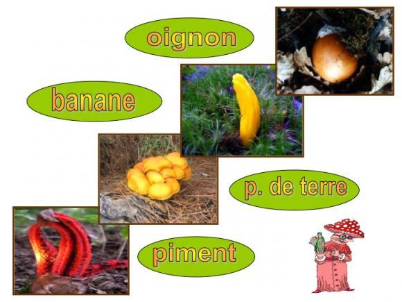 http://lancien.cowblog.fr/images/Fleurs4/Diapositive04.jpg