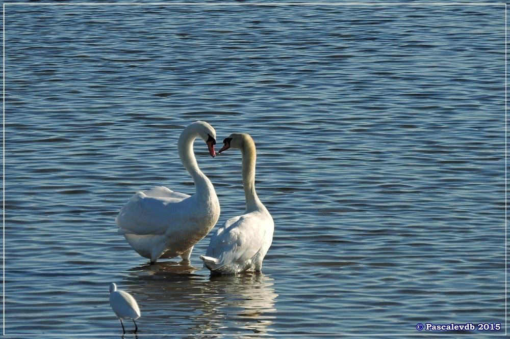 Réserve ornitho du Teich - fin décembre 2015 - 4/6