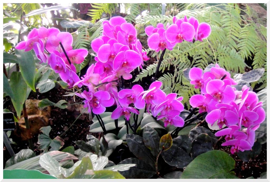 Paris Exposition - Jardin des Plantes Mille et Une Orchidées - Le ...