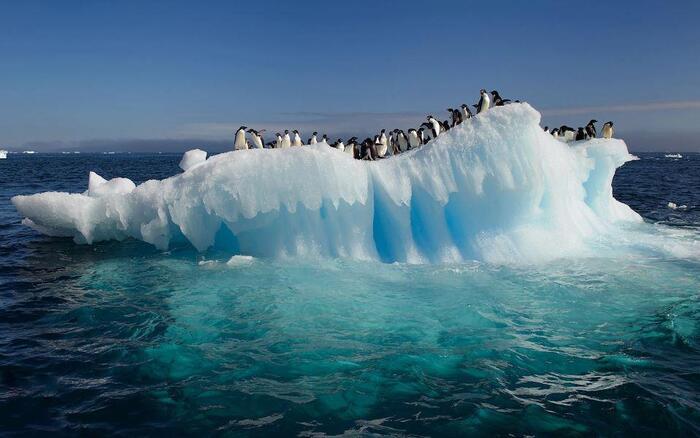 Balade En Antarctique...