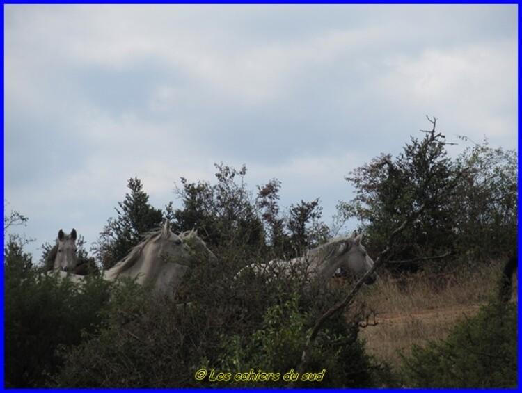 Gorges du Tarn, le causse Sauveterre