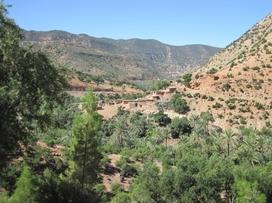 463 Maroc Sur la route d'Immouzzer
