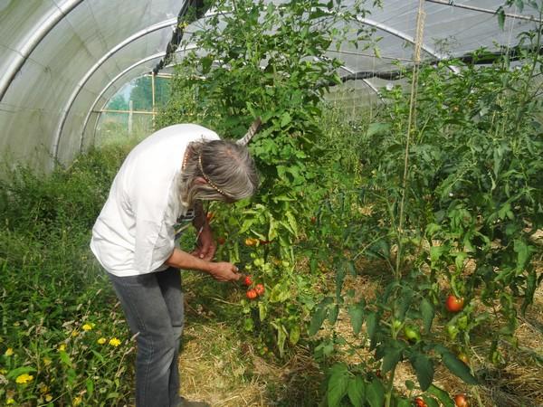"""Une rencontre avec Robert Cruel, alias """"Monsieur Tomate"""", collectionneur fou de tomates et de plantes amérindiennes..."""