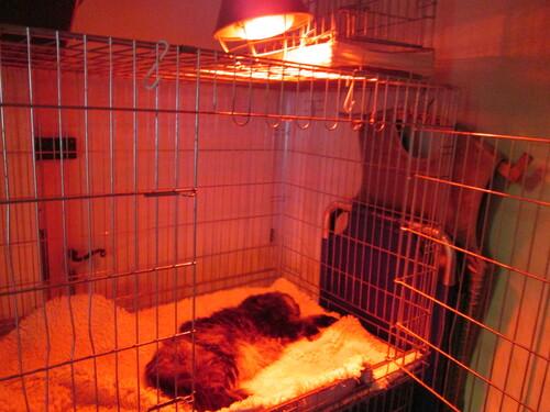 Vicky chez le vétérinaire