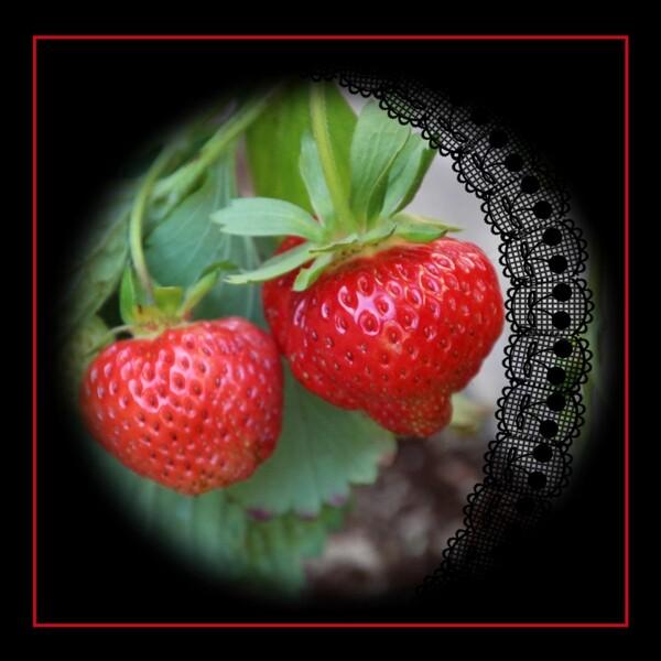 Promesses de fraises