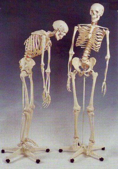 La mort et nous, adultes.