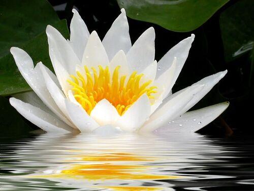 Le Yoga de Kalou Rinpoche