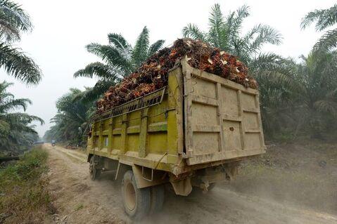Cette photographie prise le 16 septembre 2015 montre un camion transportant des palmiers à huile dans un plantation à Pelalawan, dans la province indonésienne de Riau à l'est de l'île de Sumatra