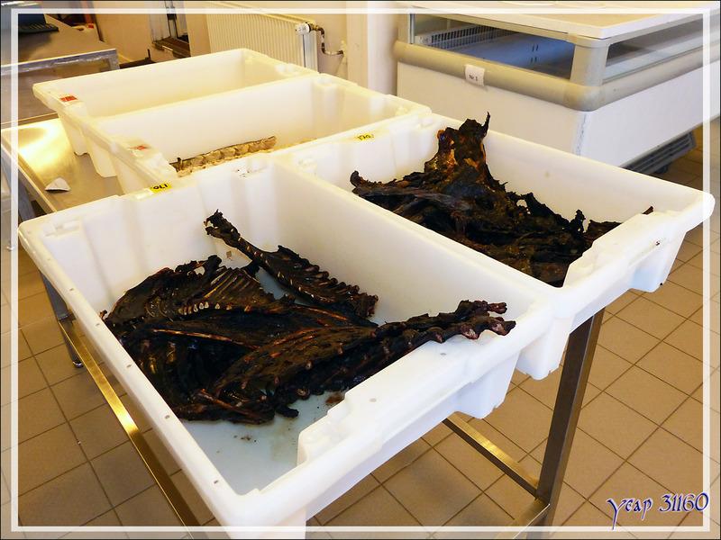 Marché de la viande et du poisson, Qimatulivik : à l'intérieur ... - Sisimiut - Groenland