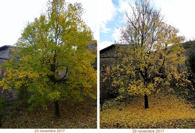 L'arbre a perdu ses feuilles