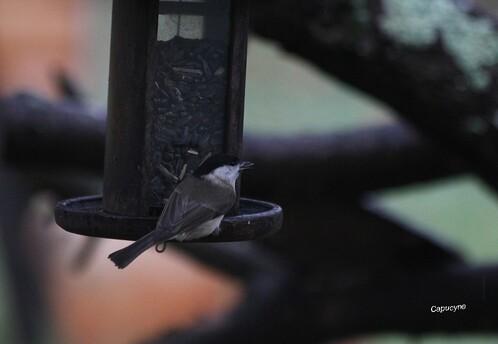 Comptez les oiseaux du jardin !