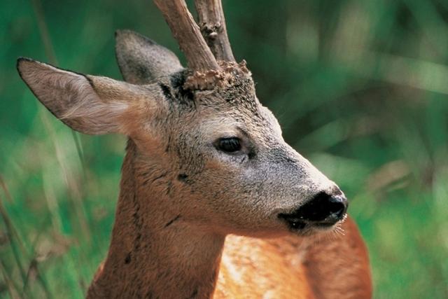 Permis de chasse 2014_2015