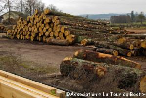 Une histoire de poutre (3) : le chêne providentiel