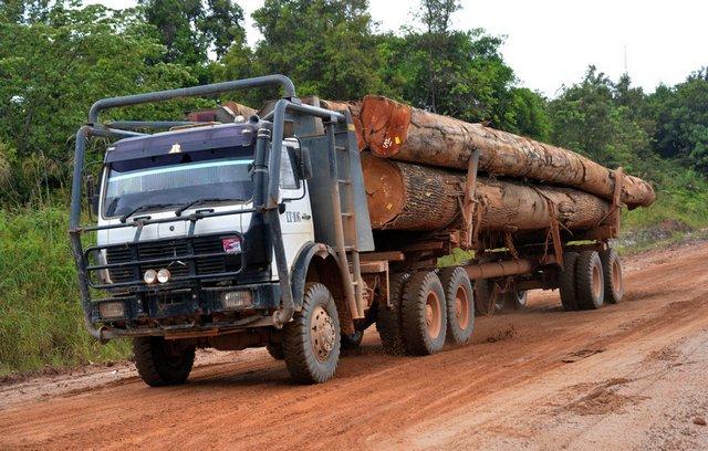 La déforestation de l'Indonésie s'accélère de manière inquiétante