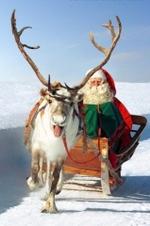 Avez-vous croisé les rennes du Père Noël ?
