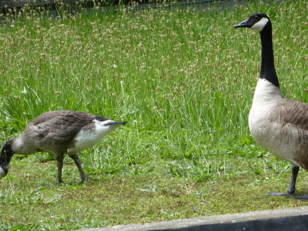 Encore des oiseaux plus ou moins gros.