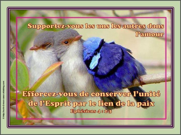 Supportez-vous les uns les autres dans l'amour - Ephésiens 4 : 2-3