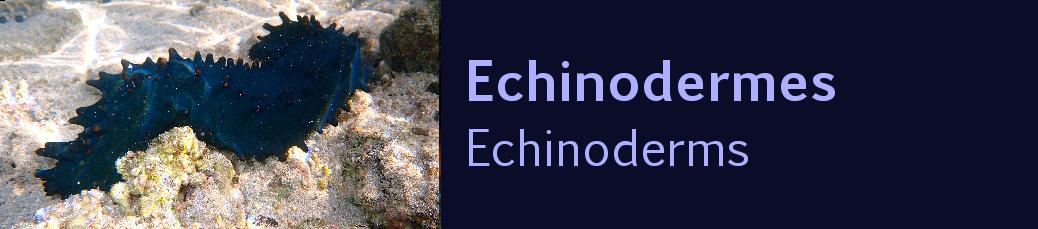 http://ekladata.com/0reC1aWJp8-0w38J_MJmRey7d78/banniere-echinodermes-tropiques.png