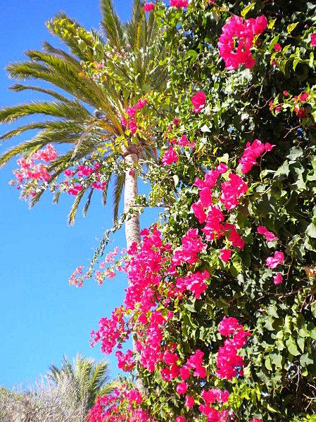 Îslas Baleares Mallorca 027
