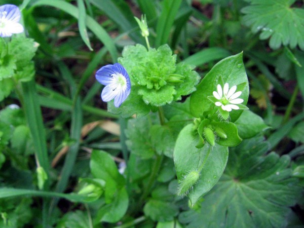 Fleurs sauvages 2178