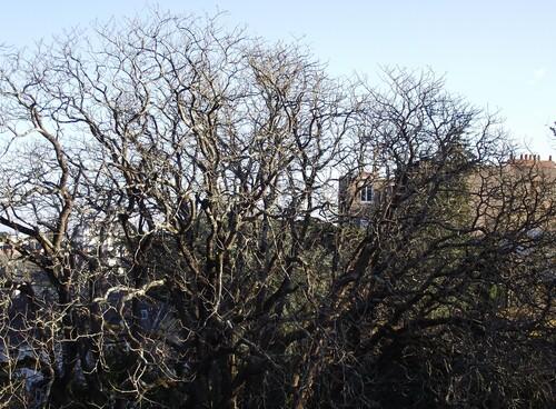 Les arbres du jardin...
