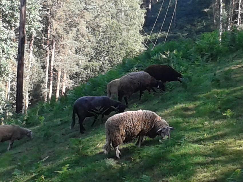 Balade aux environs d'Aurillac