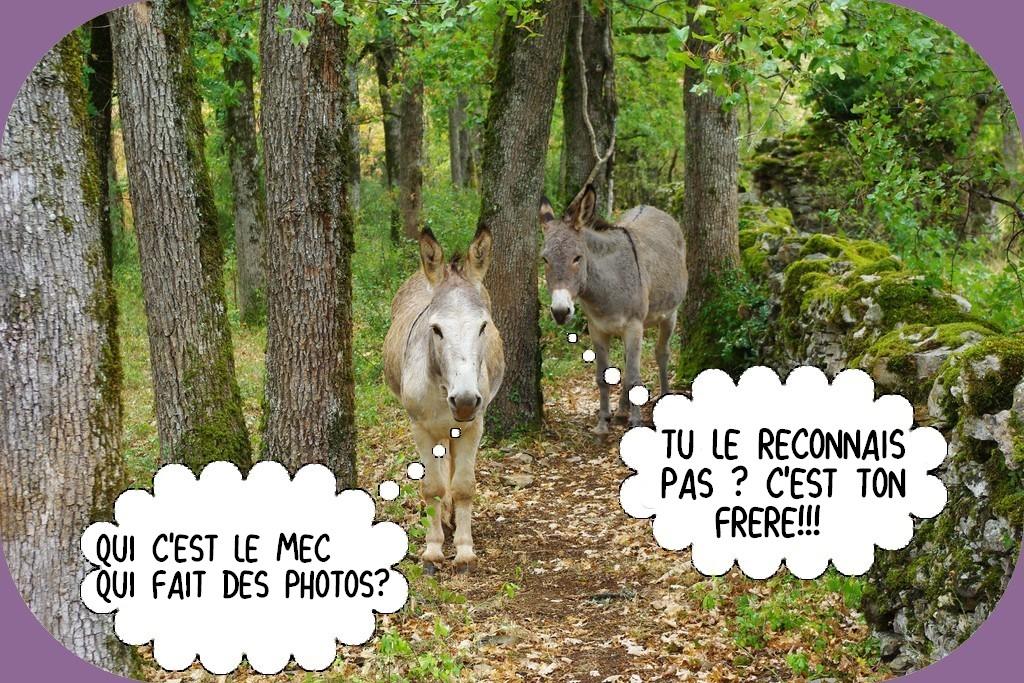 DERNIÈRE PAGE D'HUMOUR DU MOIS