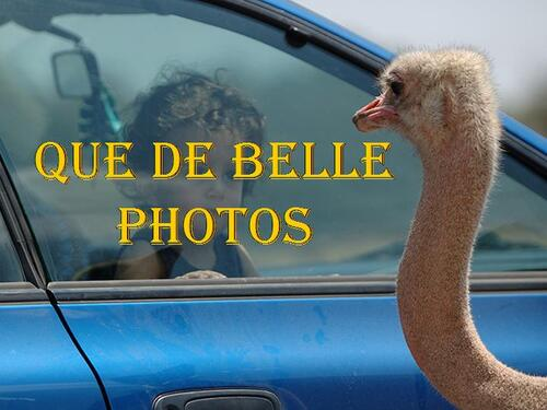 PPS BELLE  IMAGES