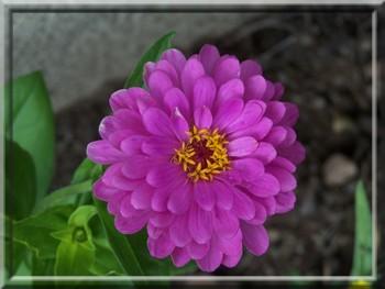 Fleurs 07