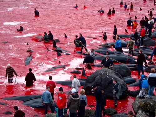 Iles Faroe