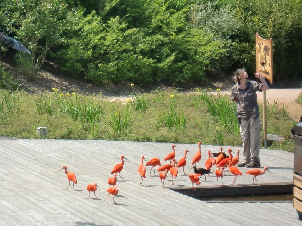Sortie scolaire des classes de CP et CLIS au Parc des Oiseaux à Villars les Dombes