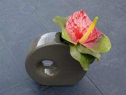 vase gris et anthurium