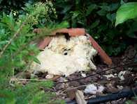 Sauvetage d'un nid de bourdons