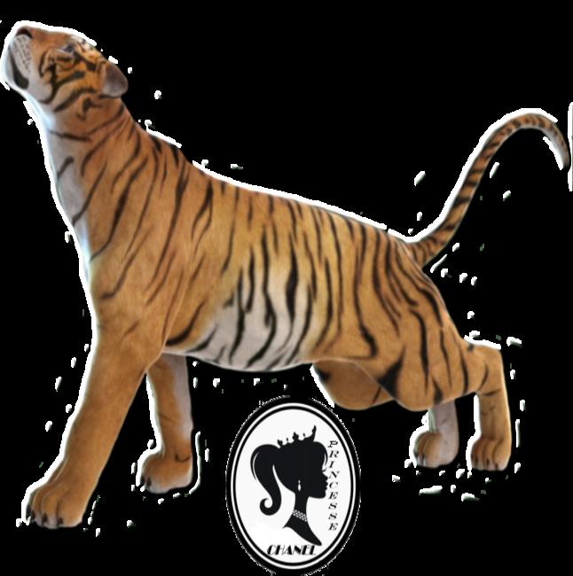 Tubes : tigres