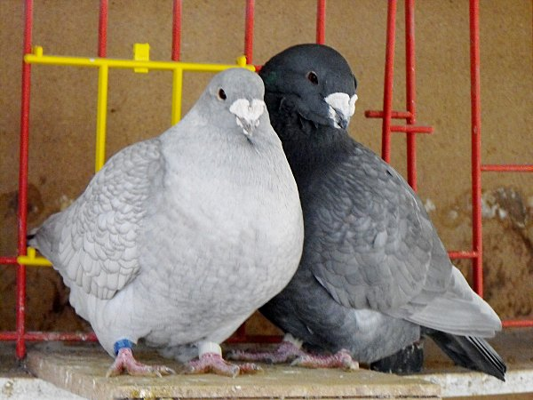ballade-et-pigeons-a-francois-028.jpg