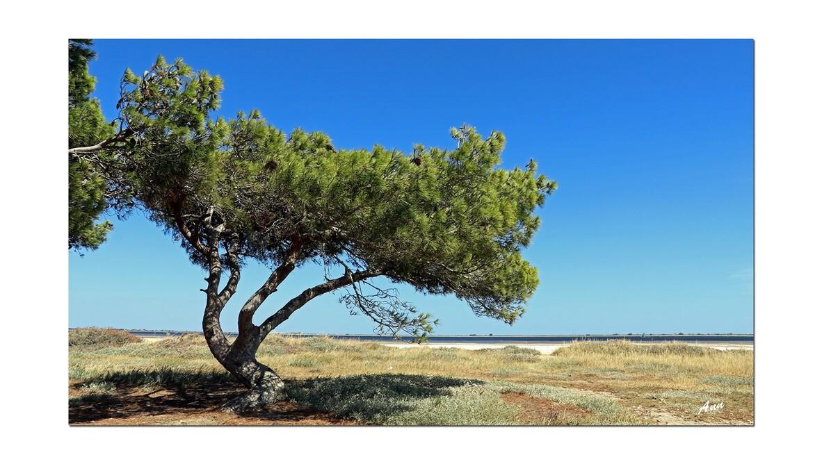Etang de la Palme (Aude)