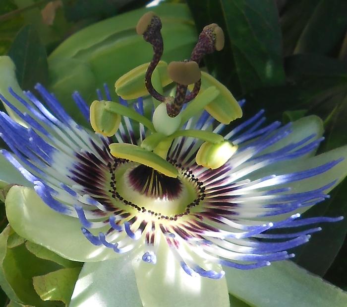 fleur danseuse