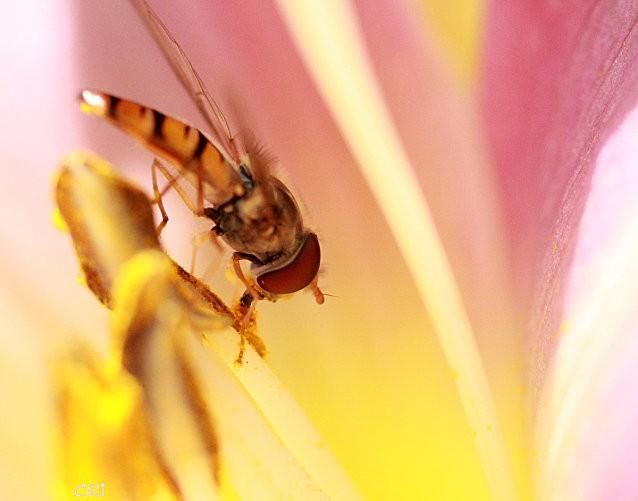 macros-insectes 3011