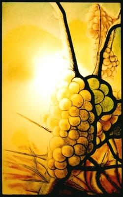 La Vigne en vitrail