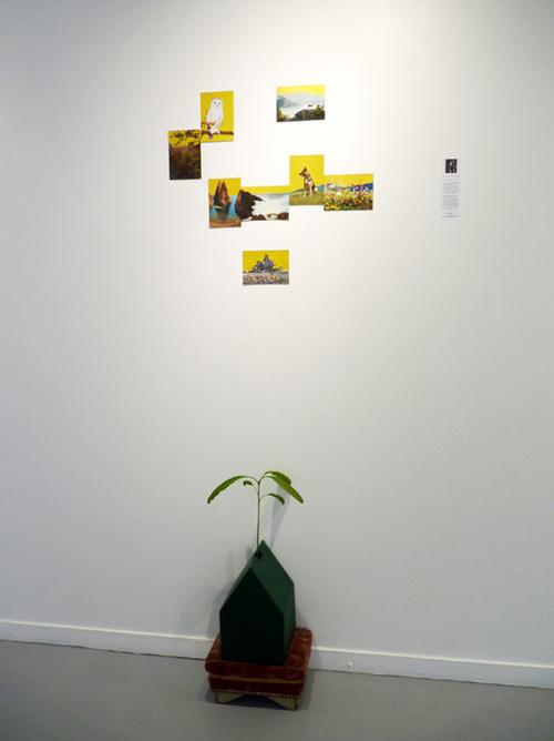 Notre maison verte... installation art contemporain