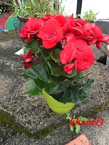 maman2012 (3)