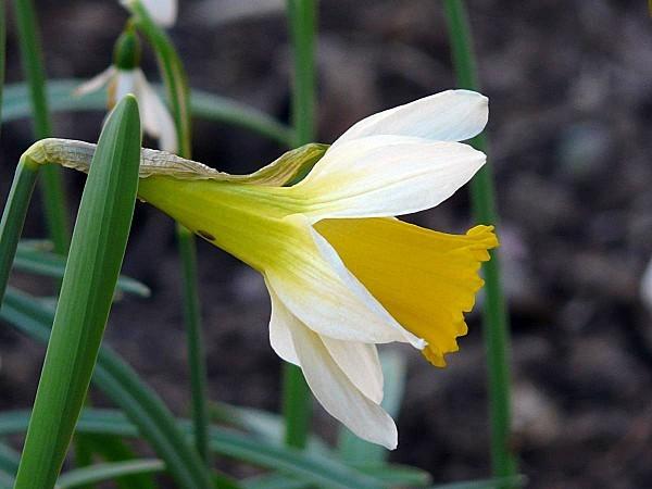 Narcisse-13
