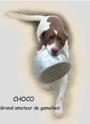 CHOCO, une crème de chien...!