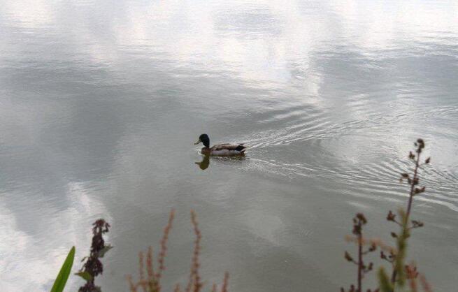 Au lac de St Denis du Maine (10)