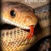 reptilestar