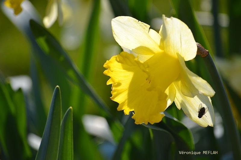 Rambouillet : Dès que le printemps revient (1)