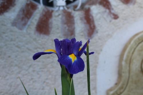 Nouveautés côté iris
